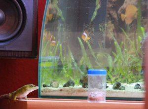 IMG_4671 newton aquarium