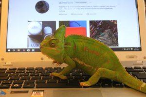 IMG_8560 Agathe auf Laptop